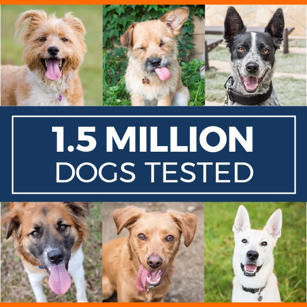 1.5M_Dogs_tested_v8a_mobile-01-min